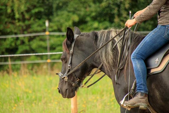 horsemans paradise privélessen