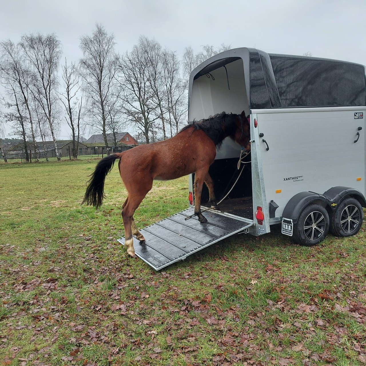 paard op training